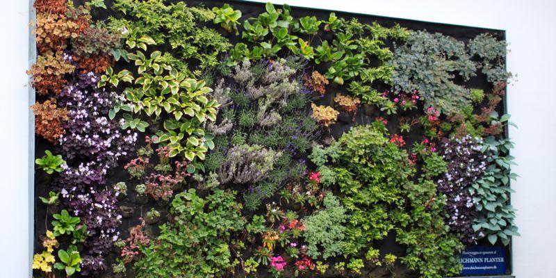 grønne vægge