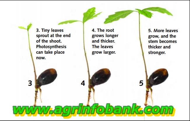 How Does a New Plant Grow?   Agriculture Information Bank