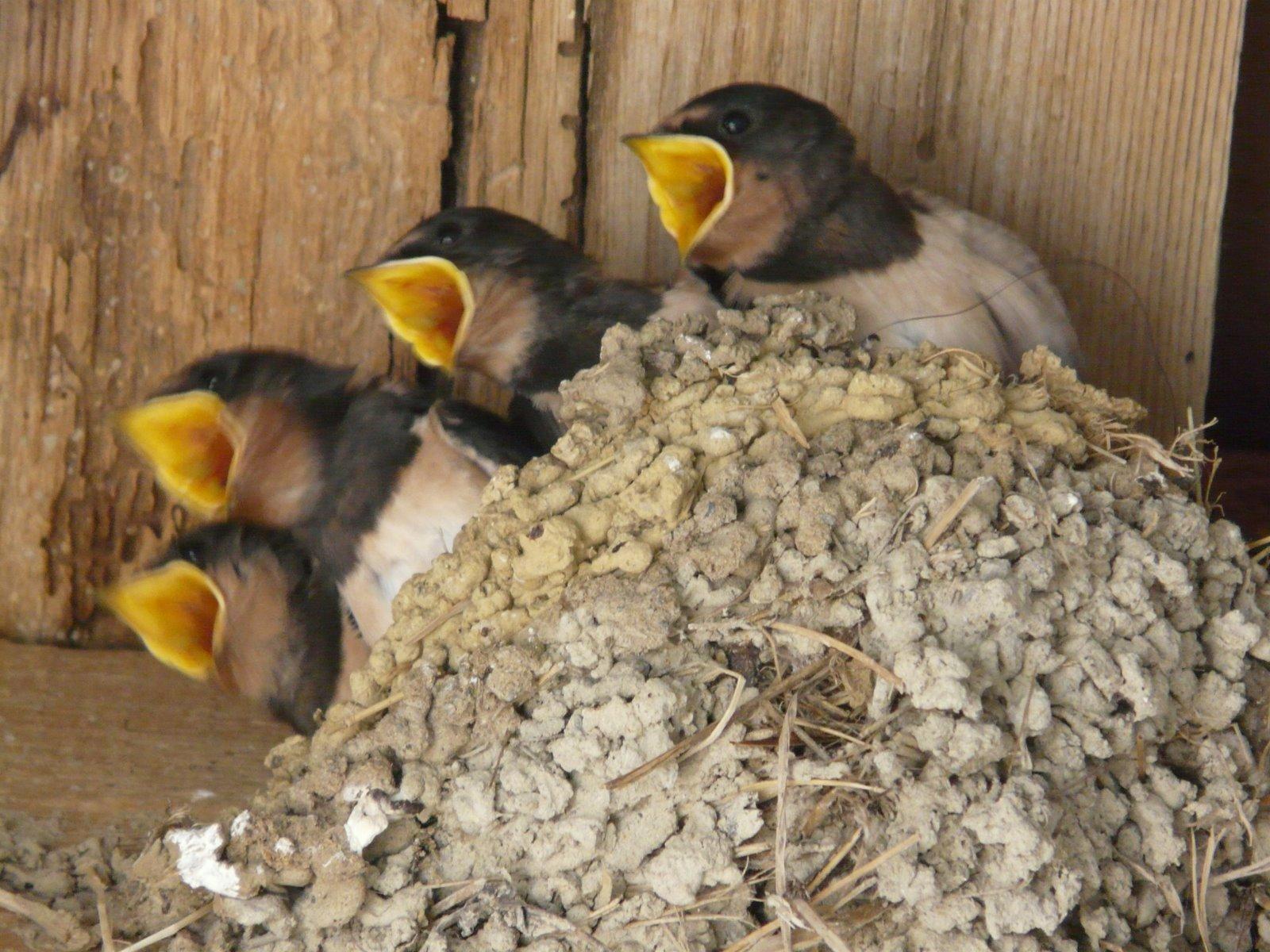 :::::Por su nido los conocerás::::: P1060050