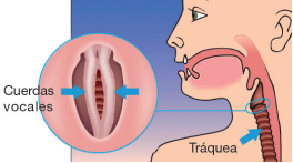 La tensión de las cuerdas vocales muestran síntomas parecidos al asma.