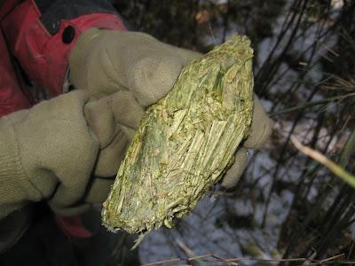糞便製茶 最貴茶葉:世界上最貴的茶葉