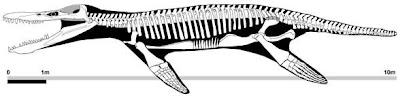 Kronosaurus Pliosauridae