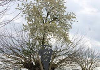 ΑΥΤΟ είναι το πιο παράξενο δέντρο…
