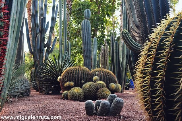 Jardines-Majorelle-Marrakech-3