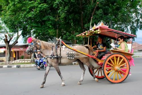 Alat transportasi kuda Bendi di Kota Solok Sumatera Barat