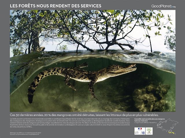 Ces 30 dernières années, 20 % des mangroves ont été détruites