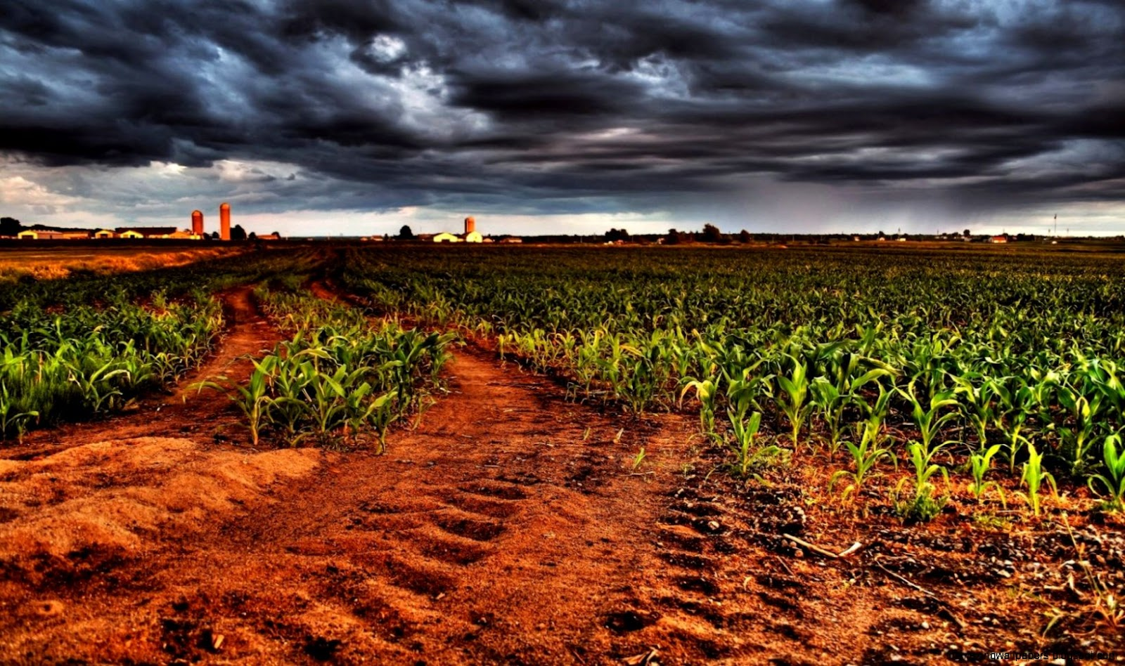Wallpaper corn field harvest clouds soil desktop wallpaper