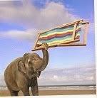Elephant beach ♥