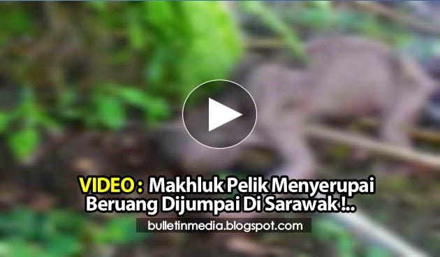 Video: Makhluk Pelik Menyerupai Beruang Dijumpai Di Sarawak !..