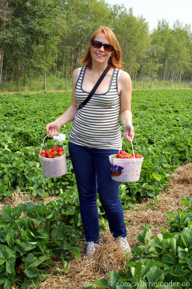 Strawberry picking in Grand Prairie, Canada