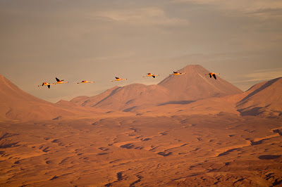 Atacama Desert Travel Gallery