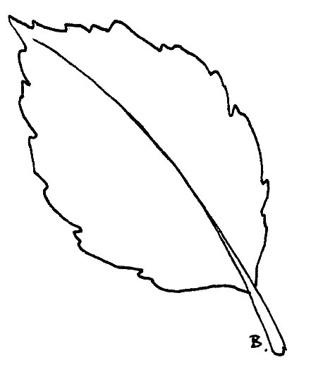 Back > Gallery For > Sunflower Leaf Pattern