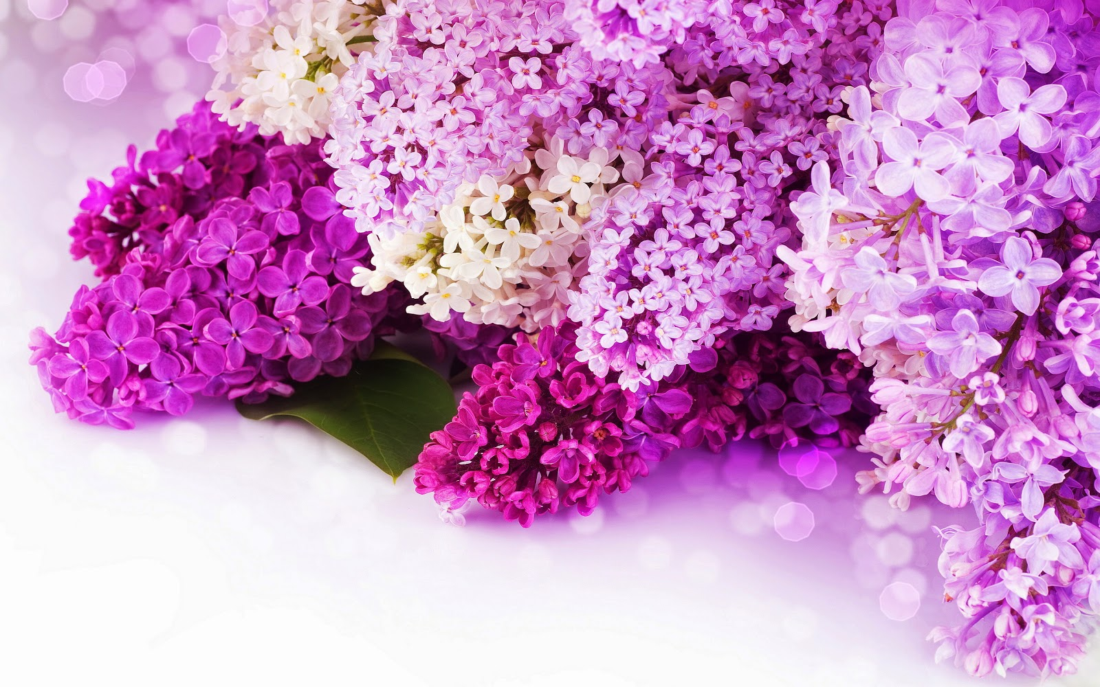 http://www.mrwallpaper.com/wallpapers/lilac-purple-flowers.jpg