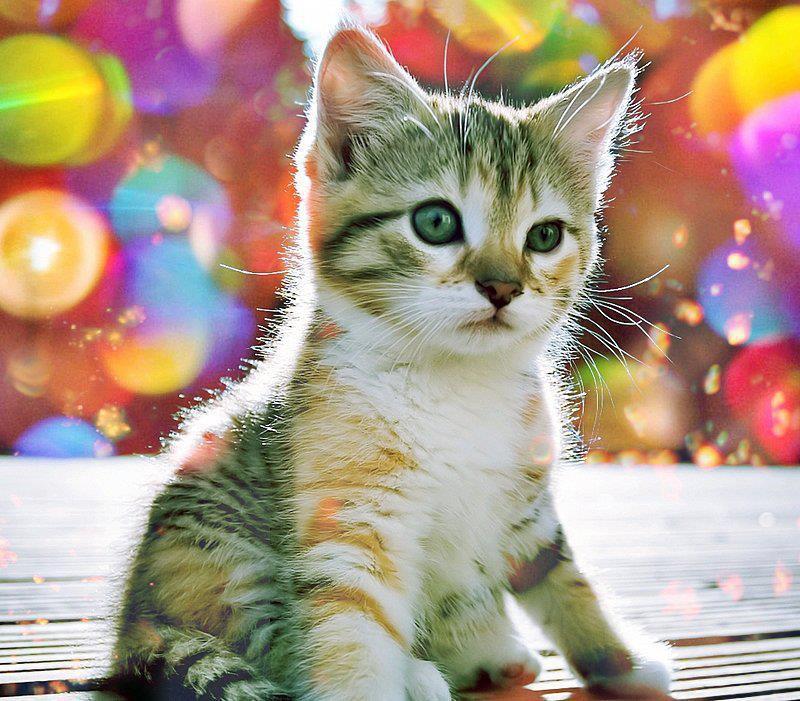 Fotografias de gatos - Fotografias y fotos para imprimir