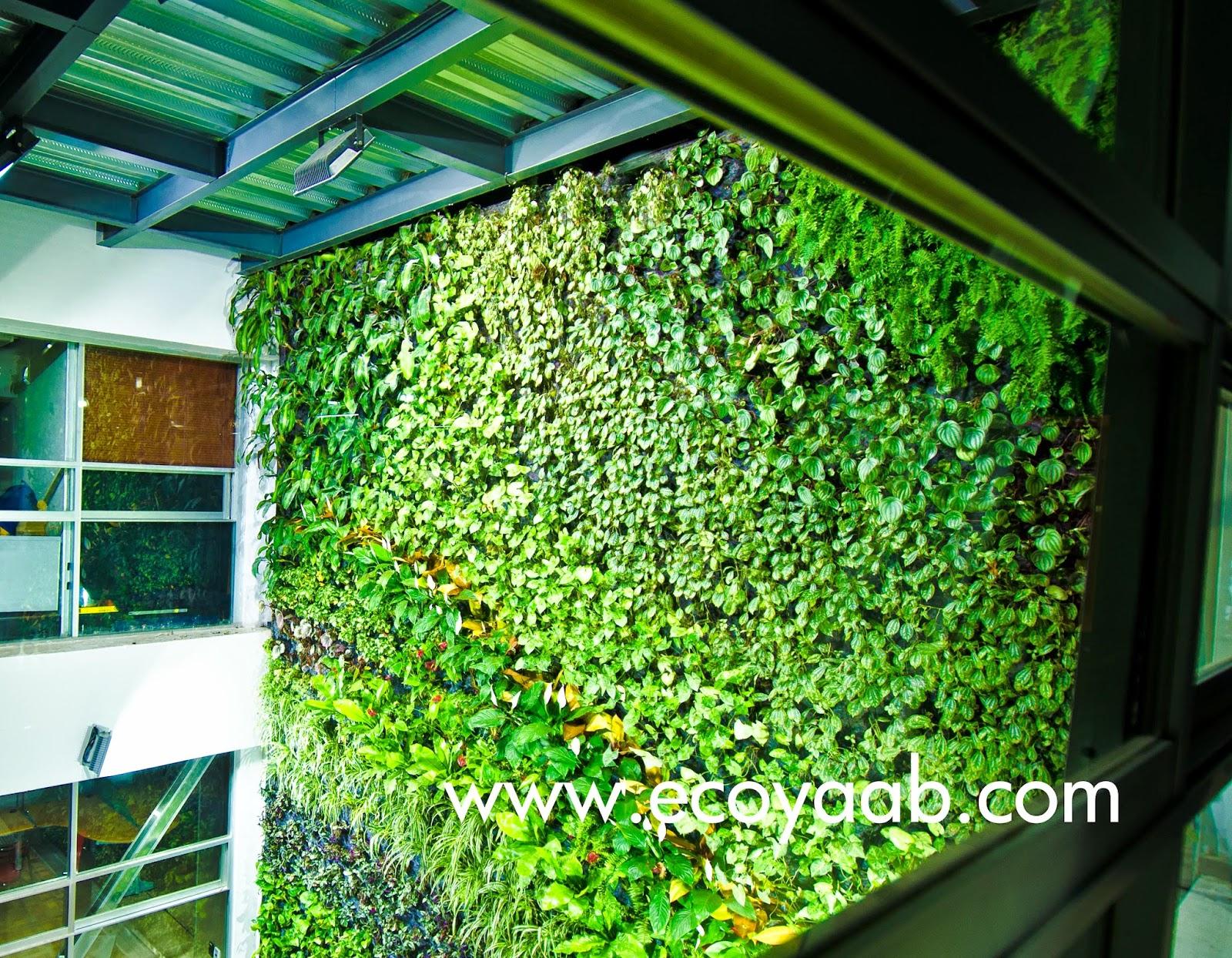 Ecoyaab mi jard n urbano for Muros verdes beneficios