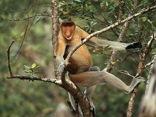 Foto Monyet Buntut Panjang
