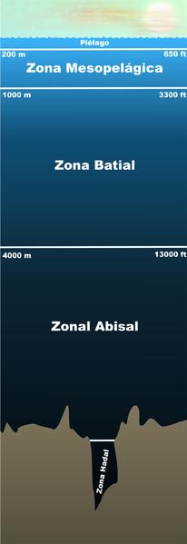 La zona abisalZona Abisal