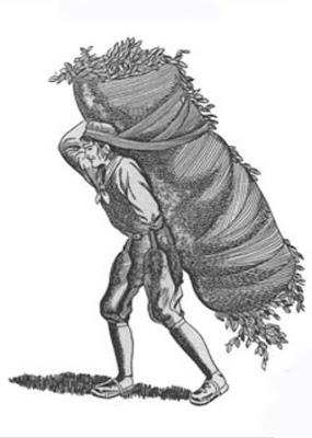história da erva-mate