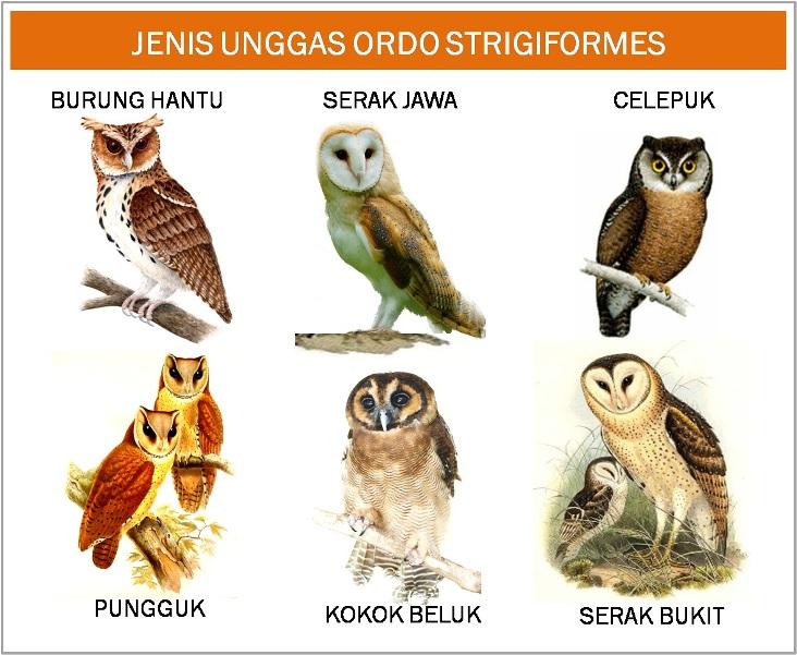 Jenis Macam Gambar Burung