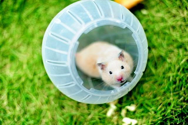 Cute and funny pictures of hamsters 2-6