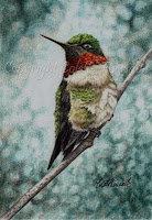 Hummingbird drawing by Colette Theriault