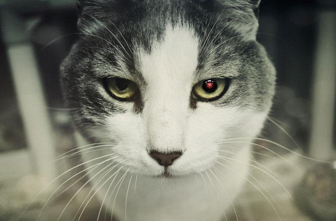 Коты-шпионы или как провалилась разведка ЦРУ