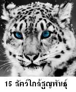 15 สัตว์โลกสวยงามที่ใกล้สูญพันธุ์