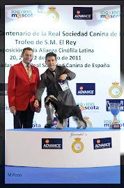 BIS JUNIOR - MADRID 2011-Alianza Latina. CH JOVEN ESPAÑA