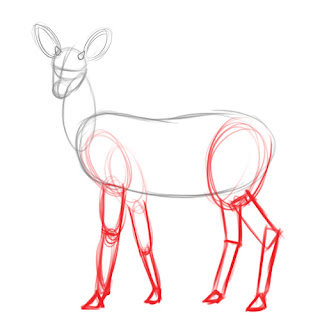 how to draw deer - step 4