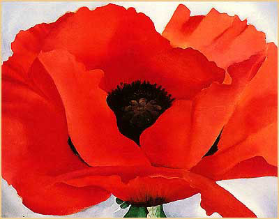 Poppy Flowers for Remember Someone