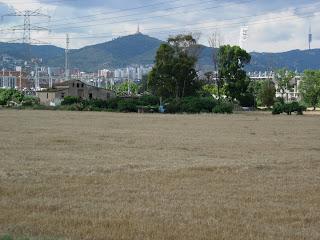 L'última zona agrícola de l'Hospitalet