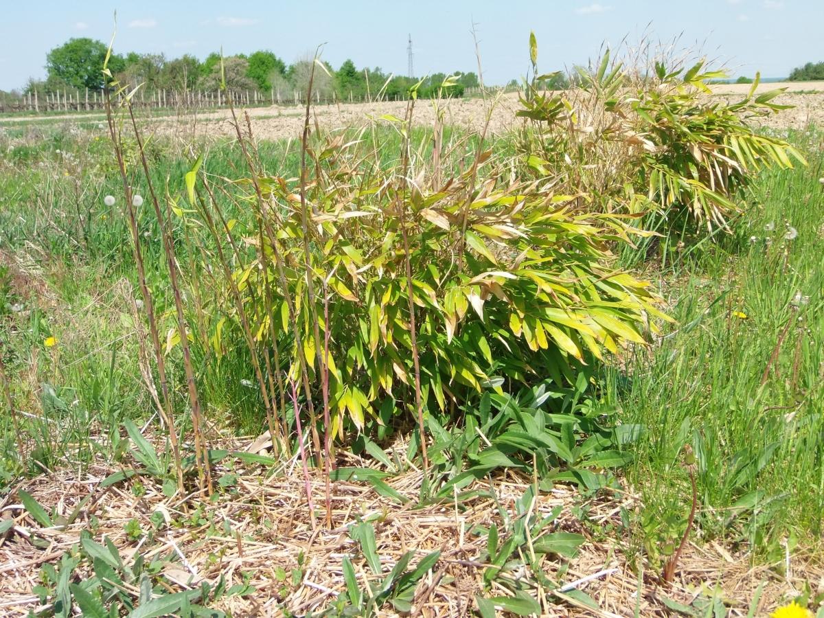 Moso bamboo diary 4 in between for Moso bamboo prezzi