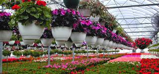 Floriculture Consultancy