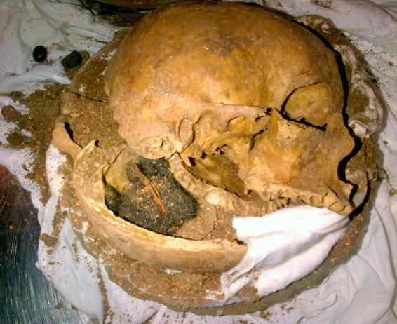 Human Skull (FLL)