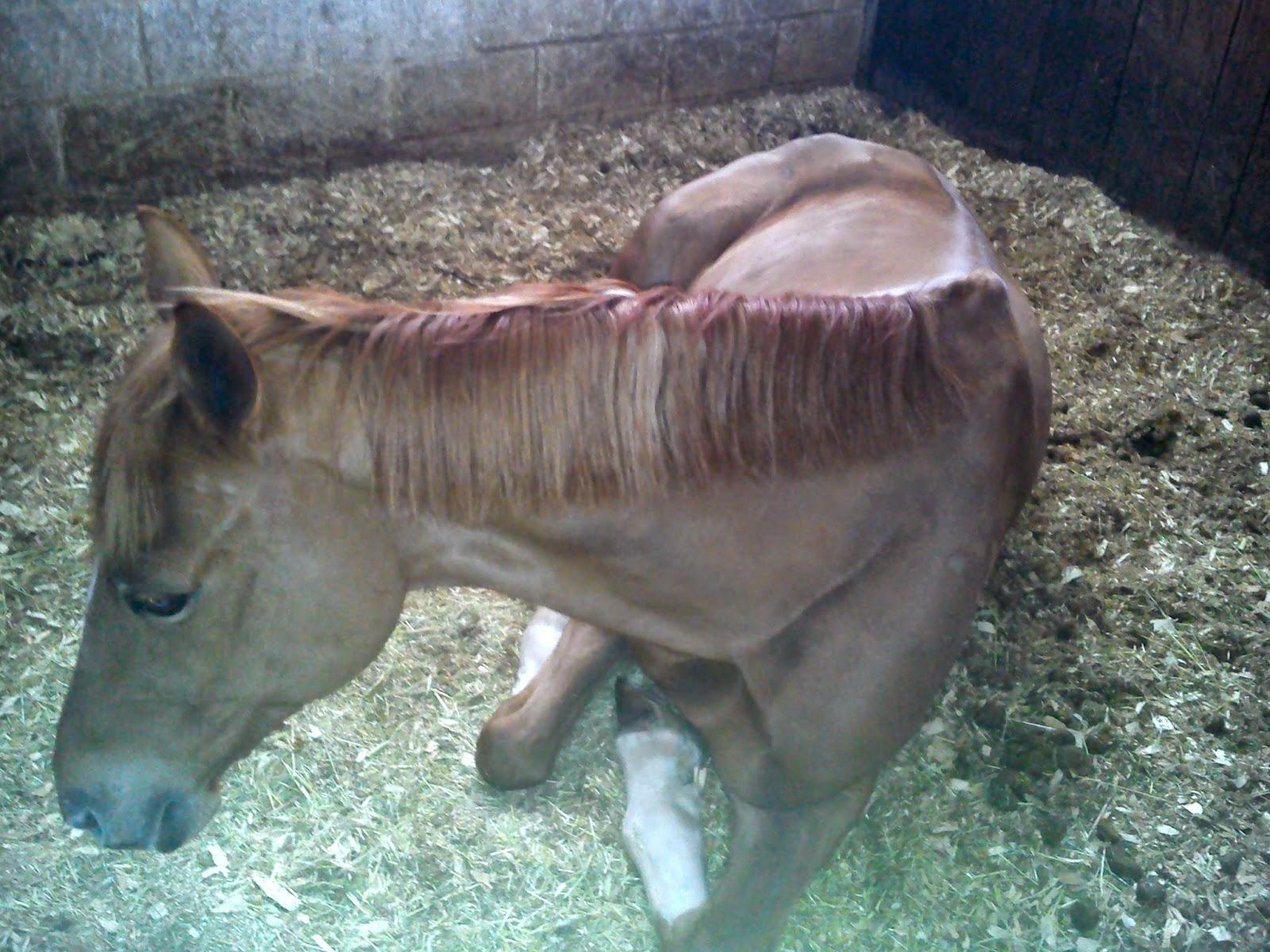 Galopejunior: La cama del caballo