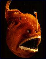 anglerfish ikan mematikan