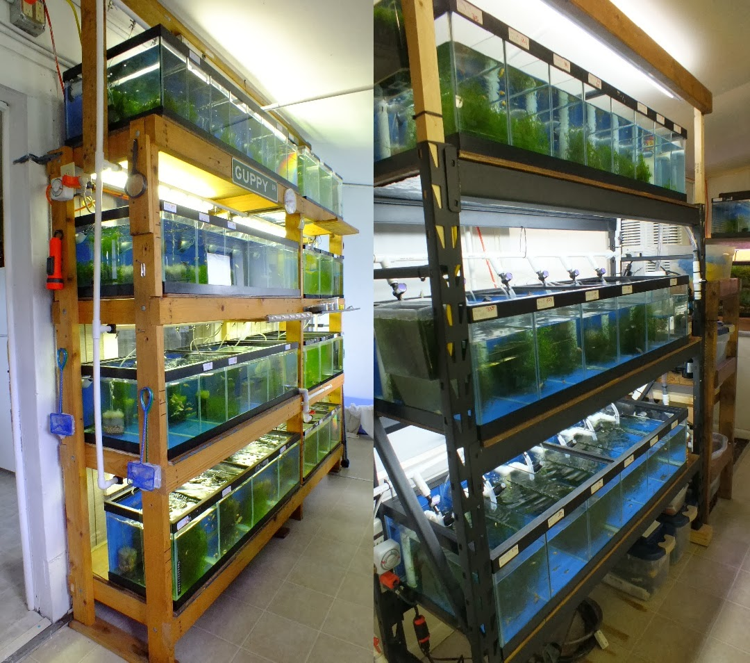 Current Fishroom