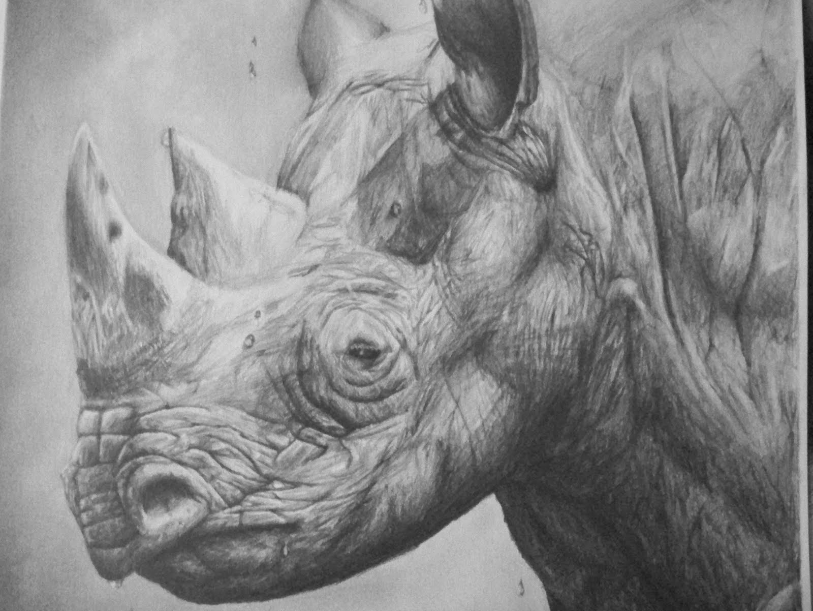 Pencil drawings of wild animals graphite pencil drawings