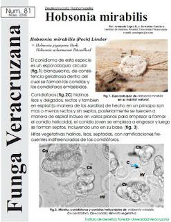 Hobsonia Mirabilis (Deutoromycota: Hyphomycetes)