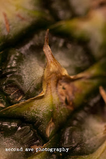 texture, produce, fruits, vegetables, virginia photographer, food photography, project 52, 100mm f/2.8 Macro, canon,