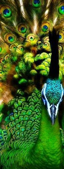 The Green beauti