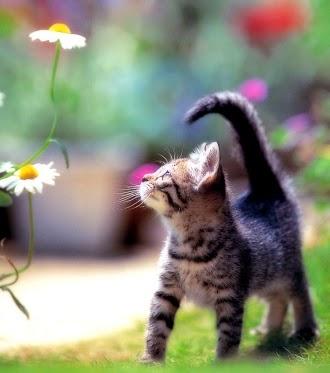 ผลการค้นหารูปภาพสำหรับ cat with flowers