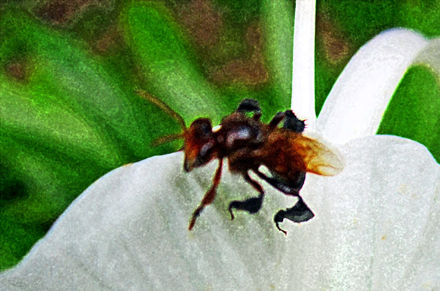 colored illustration of a bee on flower