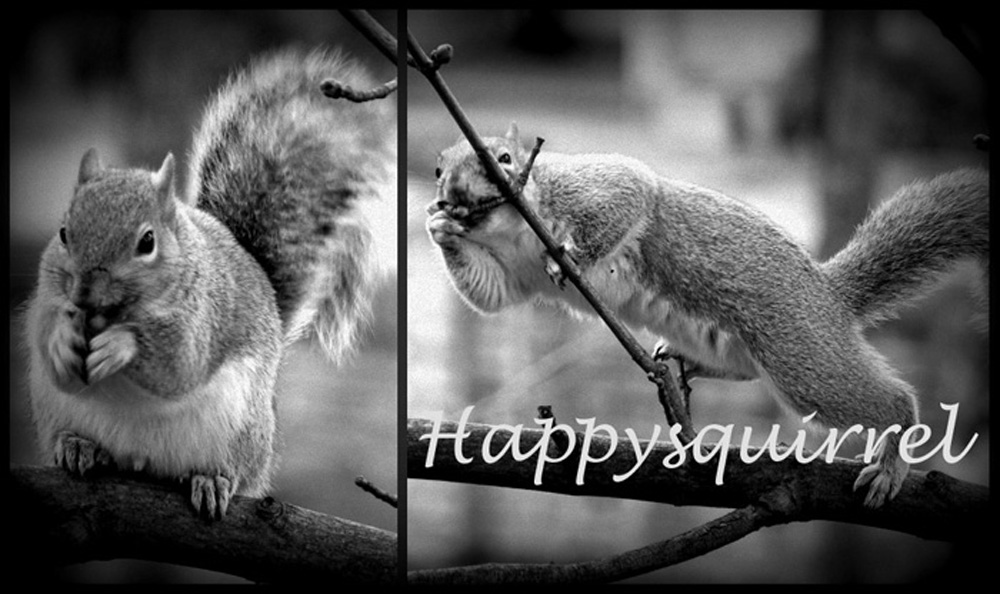 HappySquirrel