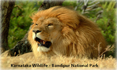 India Travel - Karnataka Wildlife
