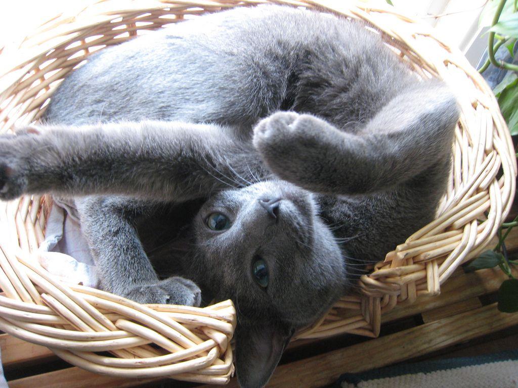 30. Basket Cat by Mirjam Palosaari Eladhari