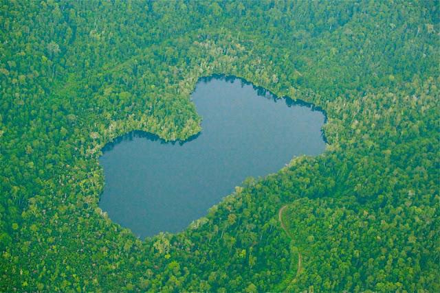 Selamatkan Hutan Surgawi di Timur Indonesia