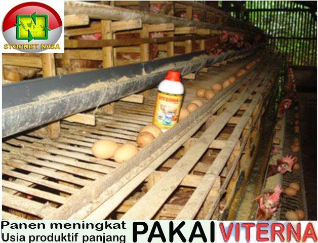 ternak-ayam-petelur-dengan-produk-organik-nasa-viterna-poc-nasa