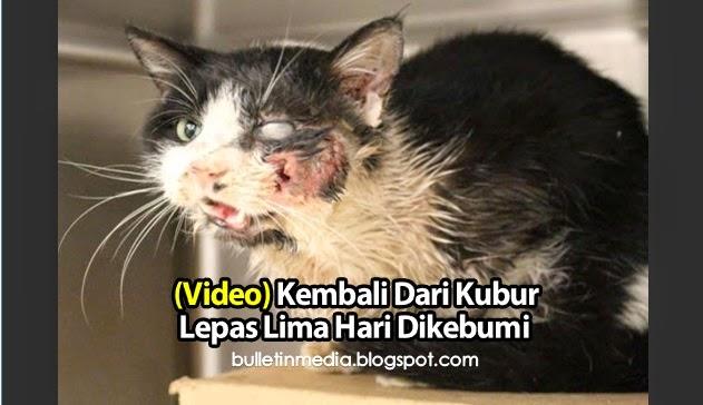 Video: Kucing Kembali Dari Kubur Lepas Lima Hari Dikebumi Kerana Dilanggar Kereta