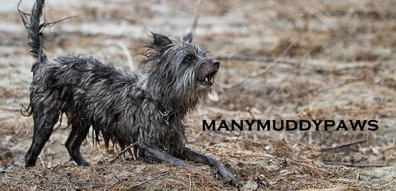 manymuddypaws